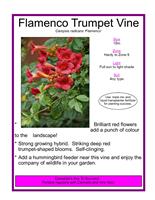 Canadale Nurseries Vine.png