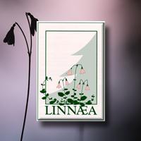 Linnaea Nurseries -.png