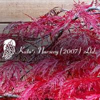 Kato's Nursery 2.png