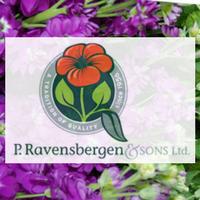 P. Ravensbergen.png
