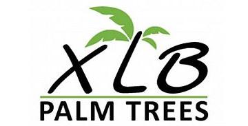 xlb-palm-trees